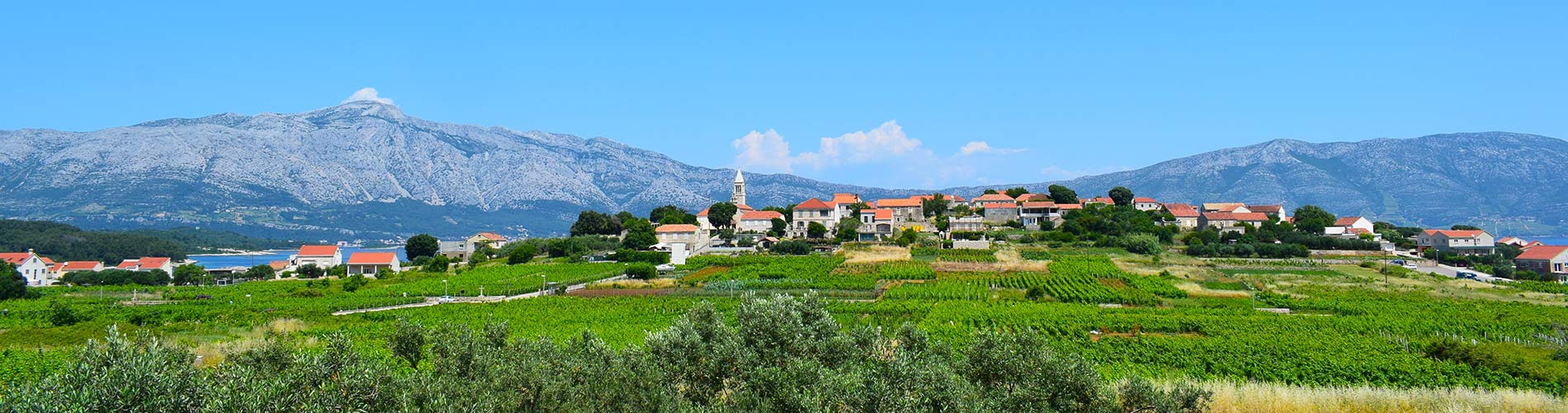 Lumbarda Vinyards Holiday Korcula   Croatia.jpg